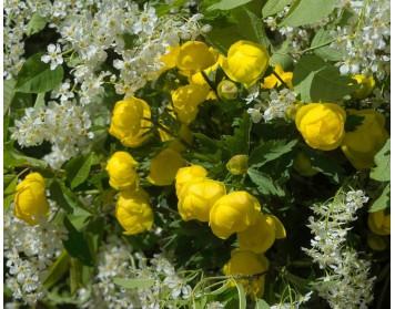Самые красивые майские цветы