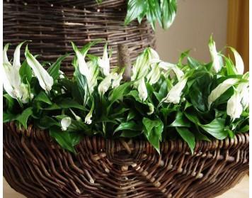 Какие растения вы должны иметь в своей квартире в теплые дни